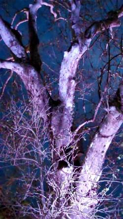 Nelsonville Trees