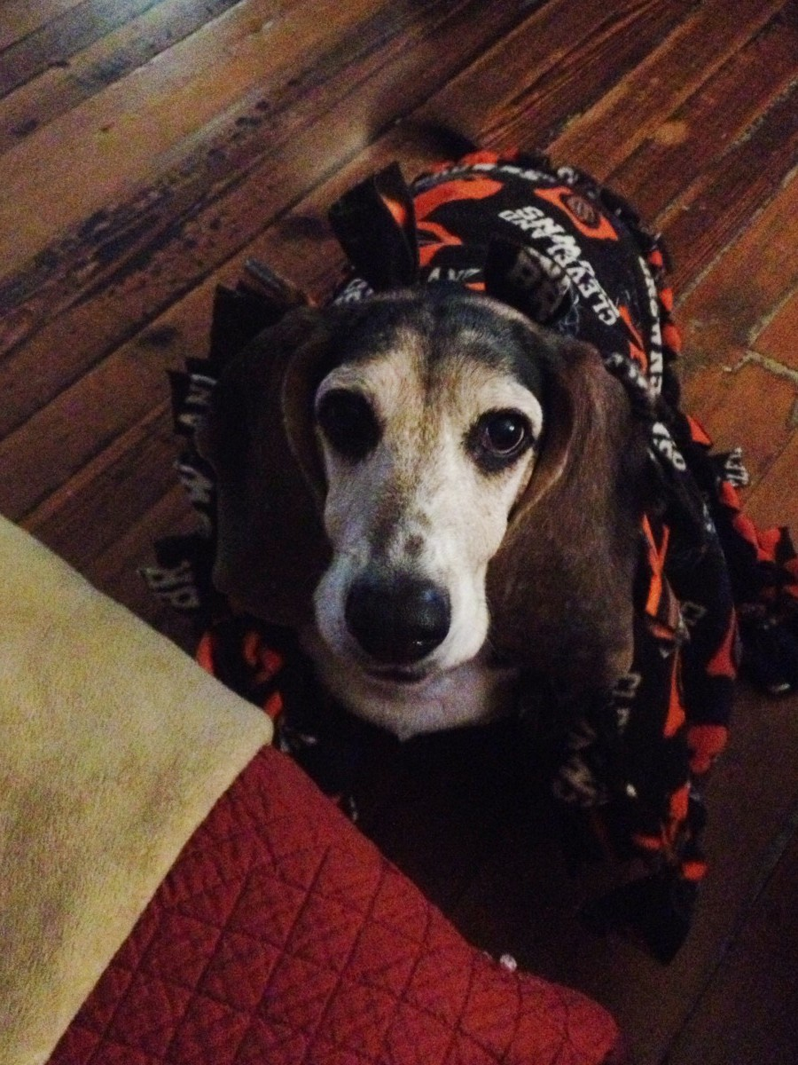 Rest in Peace Lucy, Go Browns!